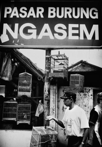 Selalu setia mengunjungi pasar Ngasem