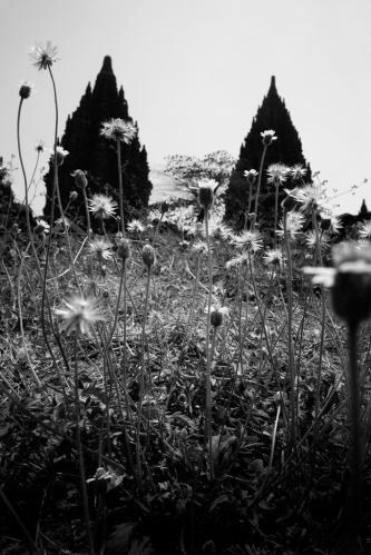 Indah rumput kecil