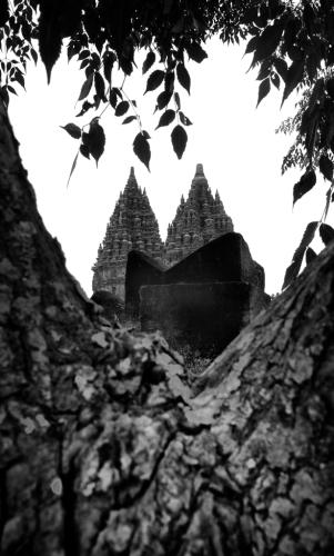 Pohon perindang gersang terik surya